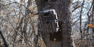 How to hide trail camera from humans